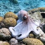 Sea Cow Snorkeling Trips Photo