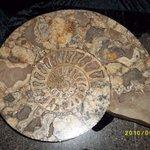 Beautiful fossils