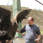 Seeing a condor