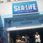 At the Sea Life Aquarium,Benelmadéna,Spain