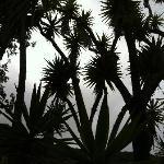 botanical gardens- a sillouette