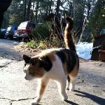 B&B cat
