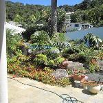 the pool plantings