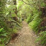 typical view in the Beech rain forest