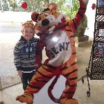beny the tiger