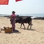 Fruitseller and livestock by bar