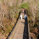 looking back from the observation tower at Sawgrass Lake Park, feb 2012