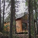 The Cottage in the Forest!