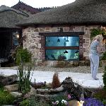 the aquarium at the watermill