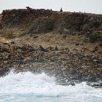 More seals...