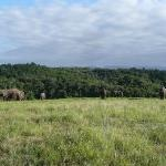 Elephants' leisure time after sunrise walk
