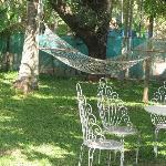 one of two hammocks in garden