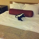 Greeted with a stuffed skunk lol :)