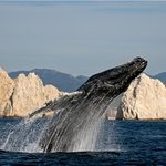 Cabo Expeditions - Day Adventures