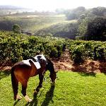 Horse riding at The Manor at Ngorongoro