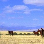 Cimmaron Sky Dog Wild Horse Sanctuary