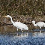 Teich Bird Reserve