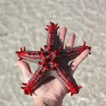 beim Korallenriff kann man Schnorcheln, Fische füttern