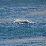 onze eerste walvis