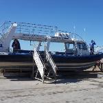 Dyer Island Cruises