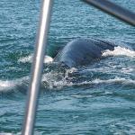 walvis en dolfijn naast de boot