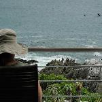 Whale watching from the deck