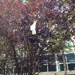 Cockatoo outside Hotel