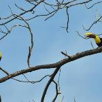 Chestnut-mandibled toucans - taken from reception area!
