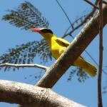 yellow bird in tree outside room