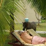 Partner & hotel pony