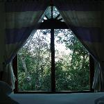 wake up dans les arbres !