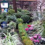 Jardin fleuri même fin janvier