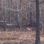 Non Camera shy Deers