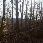 Patapsco Valley State Park Foto