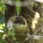 photogenic sloth