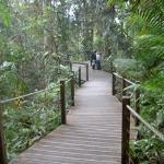 途中立ち寄るエリア。自然の森林を散策できます。