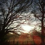 Sunrise over the woods at Hartwood House