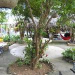 choroata en el patio/comedor