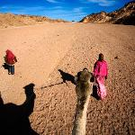 Safarievening