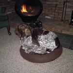 Oakley curled up by the fire