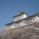 津山城と桜