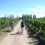Foto de Maipu Aventuras Wine Tour in Bike