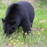 Residence Bear