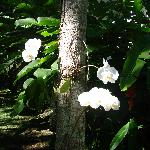 Orchids on all the trees - so pretty
