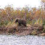 Fall Bear Viewing