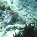 Octopus found on Klein Bonaire drift trip