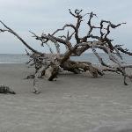 Driftwood Beach Jeckyll Island