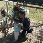 lovely goats