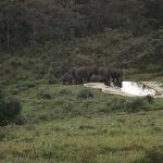 olifanten bij het zwembad