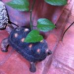 Resident turtle!